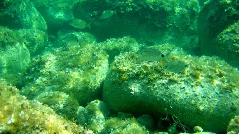 Richesse des fonds de la réserve de Cerbère-Banyuls